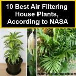 Kamerplanten die je leefomgeving filteren