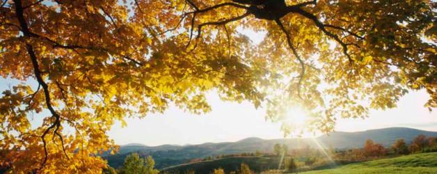Herfst-mijmeringen